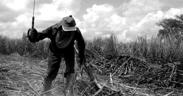 Luciana Genro reapresenta projeto de combate ao trabalho escravo