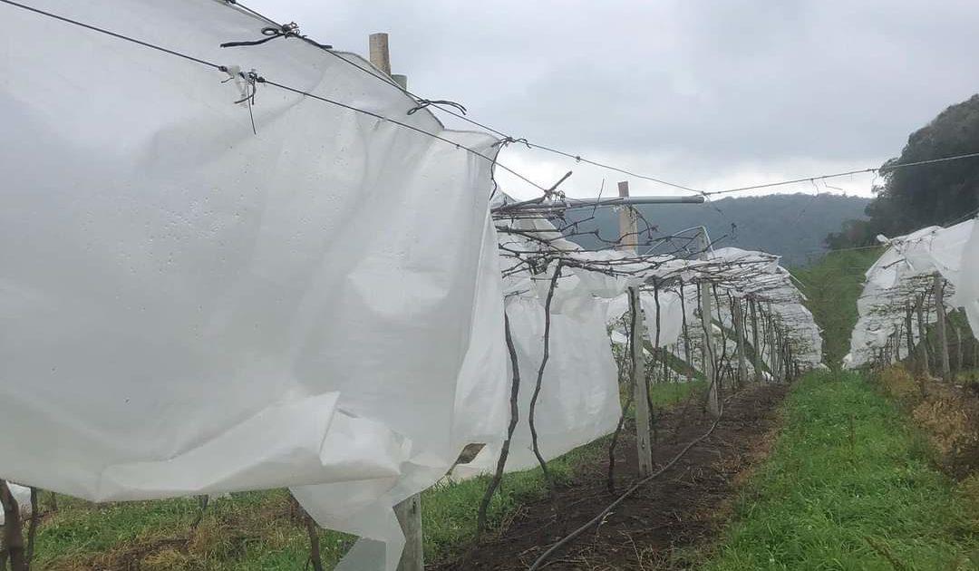 Temporal no dia 20 de setembro causou estragos nas plantações da região. | Foto: Divulgação